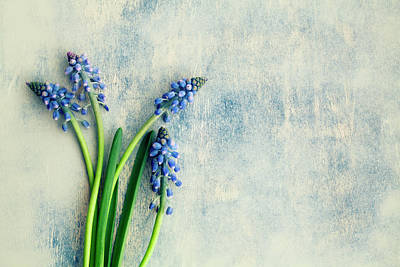 Hyacinths Photograph - Hyacinth by Jim Franco