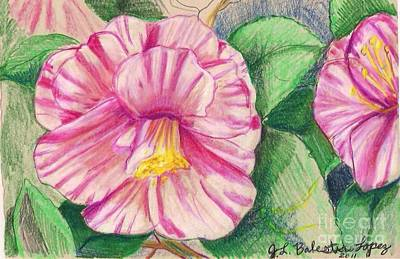 Hybiscus Pink And White Art Print by Jamey Balester