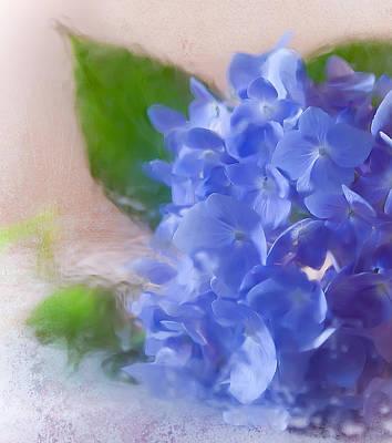 Hydrangea Art Print by Anna Rumiantseva