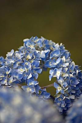 Photograph - Hydrangea by Elsa Marie Santoro