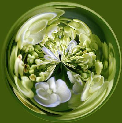 Hydrangea Orb Art Print by Sandi Blood