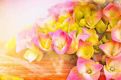 Hydrangeas In Bloom Art Print by Elaine Manley