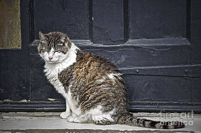 Old Door Photograph - I Am Getting Along by Gwyn Newcombe