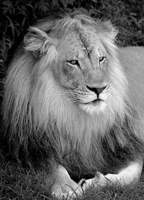 Art Print featuring the photograph I Am King by Renee Hardison