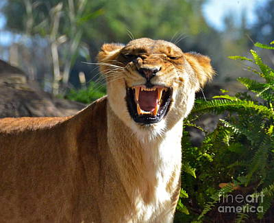 Photograph - I Am Lion Hear Me Roar by Carol  Bradley