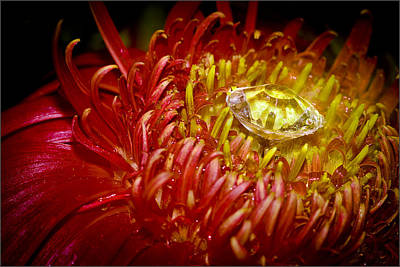 Rustenburg Photograph - I Bring You Diamonds by Ronel Broderick