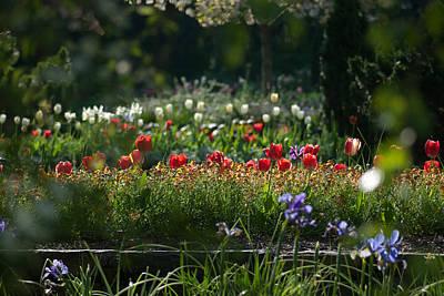Flowers Photograph - I Cast My Lot by Gene Hilton