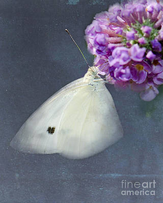 Bath Time Rights Managed Images - I Dream of a White Butterfly Royalty-Free Image by Betty LaRue