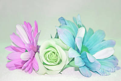 Photograph - I Dream Of Flowers by Traci Cottingham