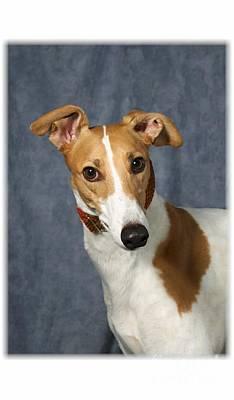 Pup Digital Art - I Heard That Greyhound by Maxine Bochnia
