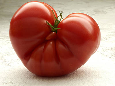Photograph - I Love Tomatoes by Sharon Talson