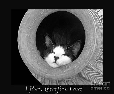 Photograph - I Purr Therefore I Am... by Karen Lewis