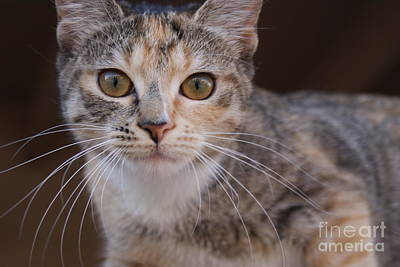 Calico Photograph - I See You by Awildrose Photography