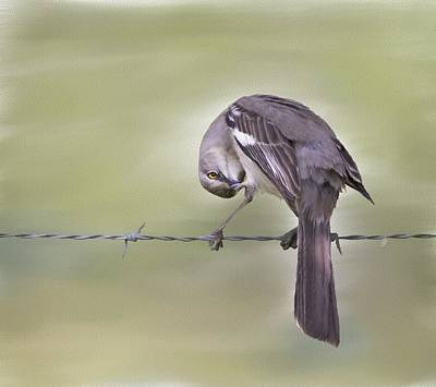 Mockingbird Digital Art - I See You by Hazel Billingsley