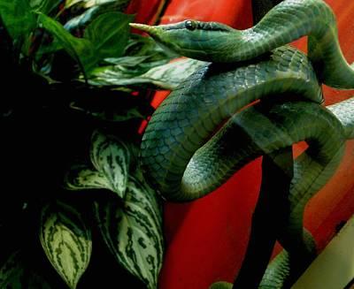 Snake Scales Painting - I Spy...an Eyeball by Mary Dunham Walters