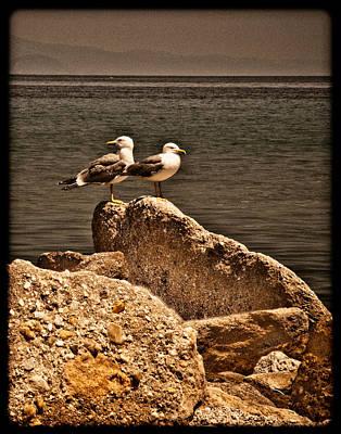 Afitos, Greece - I Think We're Alone ... Art Print