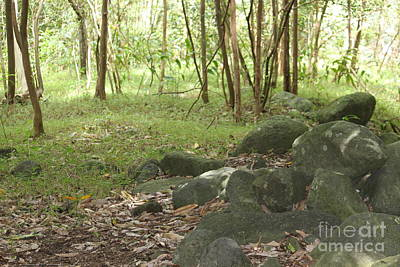 Iao Valley Forest Walk Art Print by Terri Thompson
