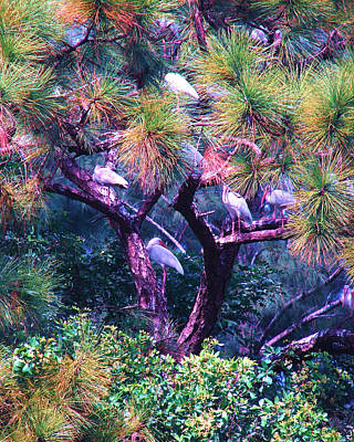 Photograph - Ibis-gone To Roost by Joy Braverman