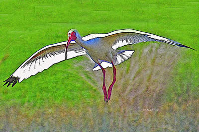 Photograph - Ibis Landing by T Guy Spencer