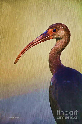 Ibis Nature Pose Art Print by Deborah Benoit