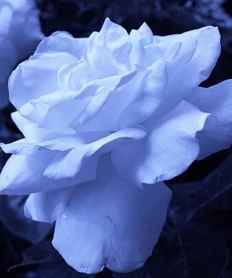 Ice Blue Rose Art Print by Bruce Bley