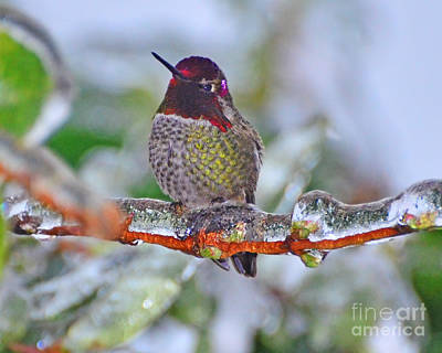 Art Print featuring the photograph Ice Cold Hummer by Jack Moskovita