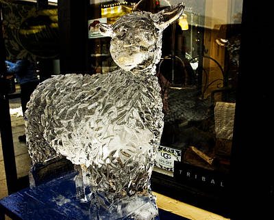 Photograph - Ice Cold Little  Lamb by LeeAnn McLaneGoetz McLaneGoetzStudioLLCcom