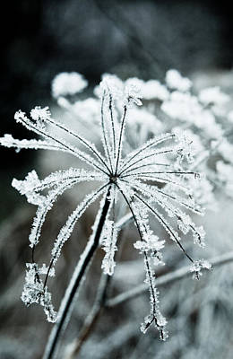 Photograph - Ice Flower by Scott Sawyer
