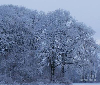 Photograph - Ice Forest by Erica Hanel