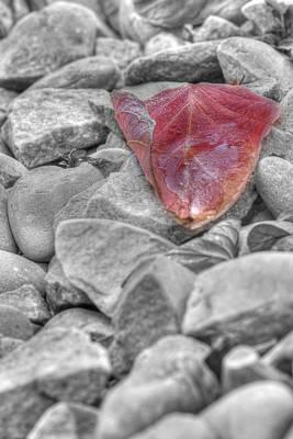 Photograph - Ice On A Leaf by Lisa Knechtel