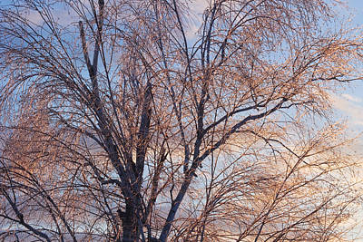 Photograph - Ice On Tree At Sunrise by Keith Webber Jr