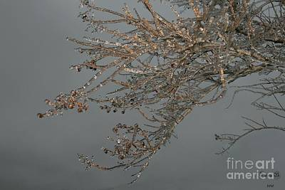 Photograph - Ice Storm by Terry Burgess