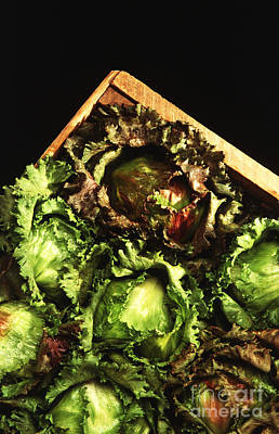 Lettuce Photograph - Iceberg Lettuce by Photo Researchers