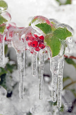 Photograph - Iced Holly by Sarah Schroder