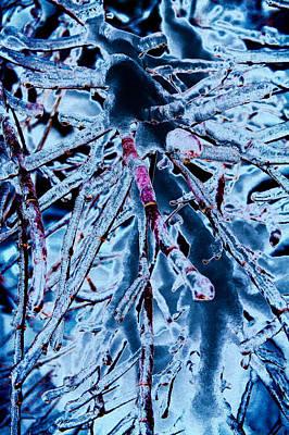 Claude Monet - Iced Vine Maple by David Patterson