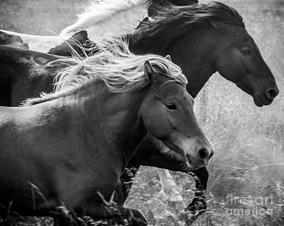 Photograph - Iceland Horses by Michael Canning