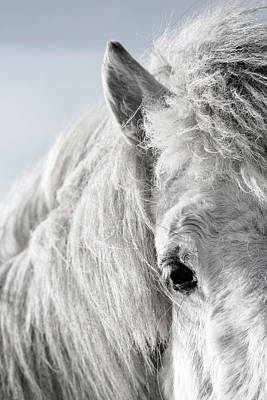 Iceland Horse Wall Art - Photograph - Icelandic Horse, by Vilhjalmur Ingi Vilhjalmsson