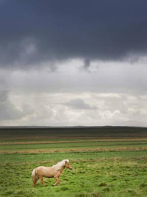 Icelandic Pony Art Print by Grant Faint
