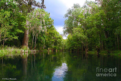 Photograph - Ichetucknee River by Barbara Bowen