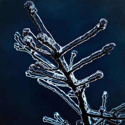 Seattle Photograph - Icy Branch by David Patterson