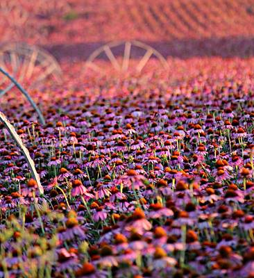 Photograph - Idaho Field Of Pink Cone Flowers by Jo Sheehan