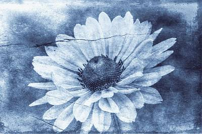 If Daisies Wore Blue Jeans Art Print by Christine Annas
