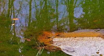Photograph - If Frogs Could Talk They Probably Would by Cliff Spohn