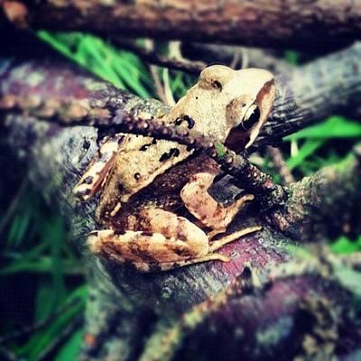 Woodland Photograph - #ighub #igdaily #ignation by Just Berns