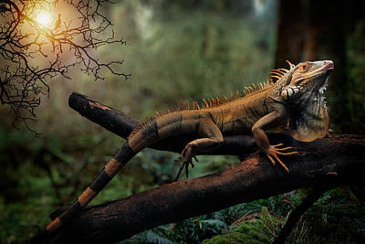 Photograph - Iguana by Zoran Buletic