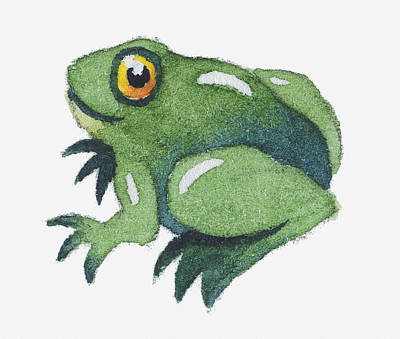 Amphibians Digital Art - Illustration Of A Frog by Dorling Kindersley