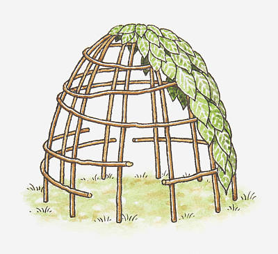 Illustration Of A Shelter In The Process Of Being Erected, Using Canes And Leaves Art Print by Dorling Kindersley