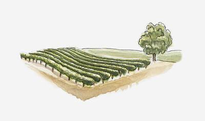 Vineyard Digital Art - Illustration Of Vineyard At Saint-emilion, Gironde, France by Dorling Kindersley