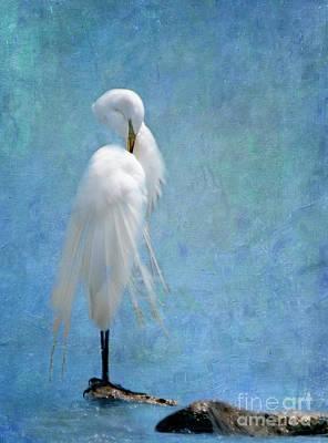 Great White Egrets Digital Art - I'm So Pretty by Betty LaRue