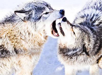 Wolf Photograph - I'm The Boss by Cheryl Baxter